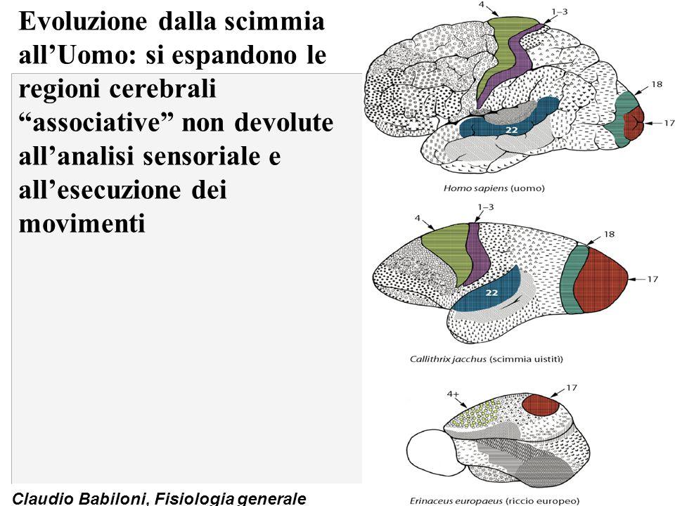 Evoluzione dalla scimmia all'Uomo: si espandono le regioni cerebrali associative non devolute all'analisi sensoriale e all'esecuzione dei movimenti