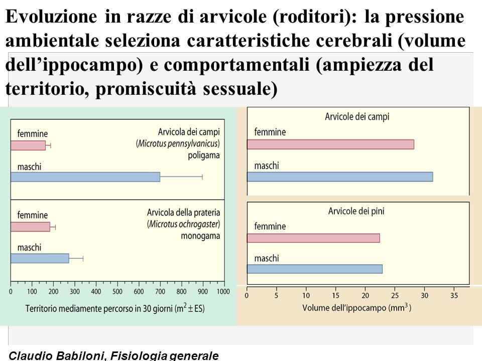 Evoluzione in razze di arvicole (roditori): la pressione ambientale seleziona caratteristiche cerebrali (volume dell'ippocampo) e comportamentali (ampiezza del territorio, promiscuità sessuale)