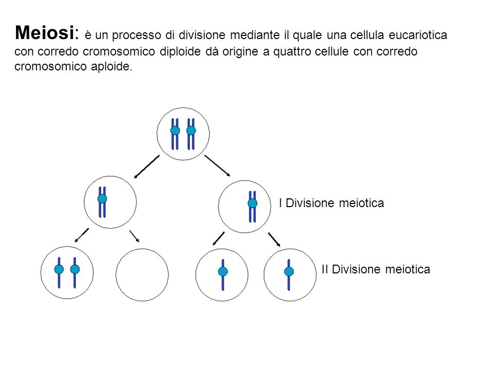 Meiosi: è un processo di divisione mediante il quale una cellula eucariotica con corredo cromosomico diploide dà origine a quattro cellule con corredo cromosomico aploide.