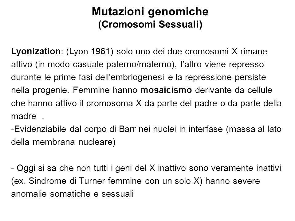 Mutazioni genomiche (Cromosomi Sessuali)