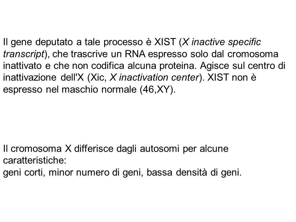 Il gene deputato a tale processo è XIST (X inactive specific transcript), che trascrive un RNA espresso solo dal cromosoma inattivato e che non codifica alcuna proteina. Agisce sul centro di inattivazione dell X (Xic, X inactivation center). XIST non è espresso nel maschio normale (46,XY).