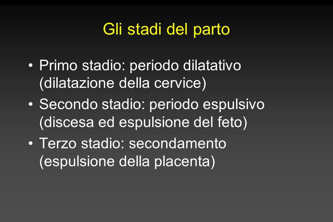 Gli stadi del parto Primo stadio: periodo dilatativo (dilatazione della cervice) Secondo stadio: periodo espulsivo (discesa ed espulsione del feto)