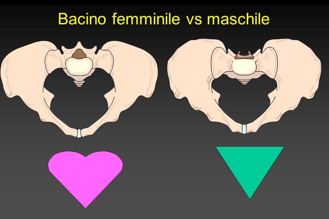 Bacino femminile vs maschile