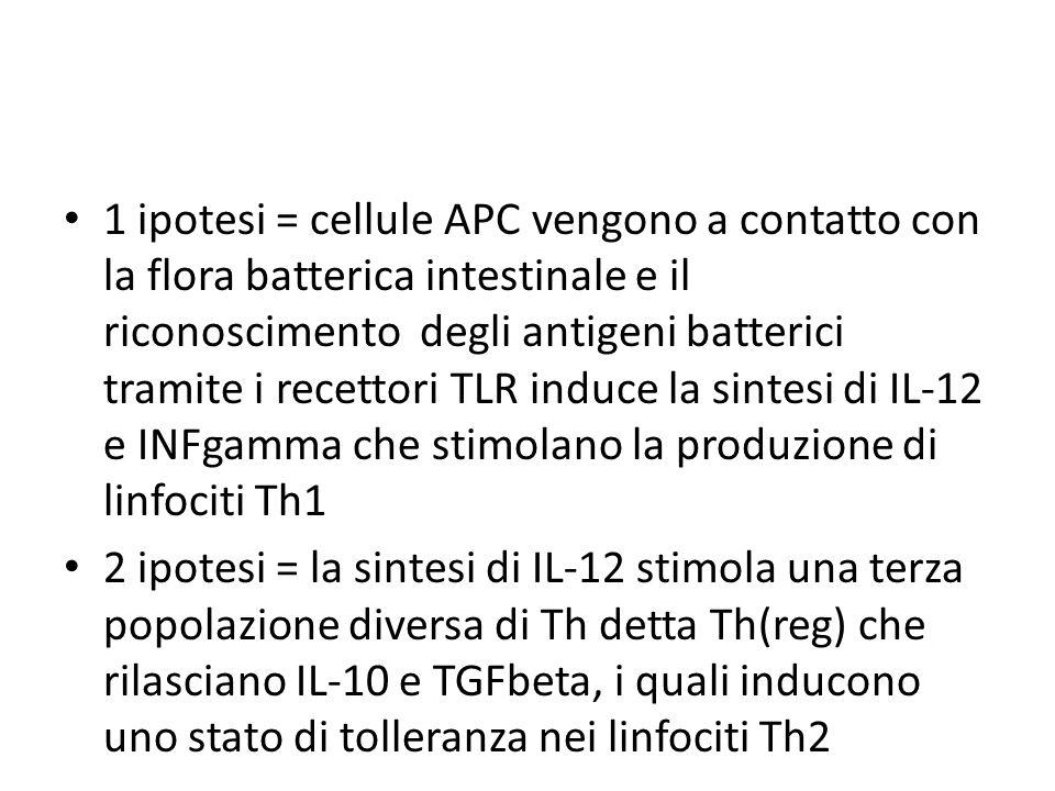 1 ipotesi = cellule APC vengono a contatto con la flora batterica intestinale e il riconoscimento degli antigeni batterici tramite i recettori TLR induce la sintesi di IL-12 e INFgamma che stimolano la produzione di linfociti Th1