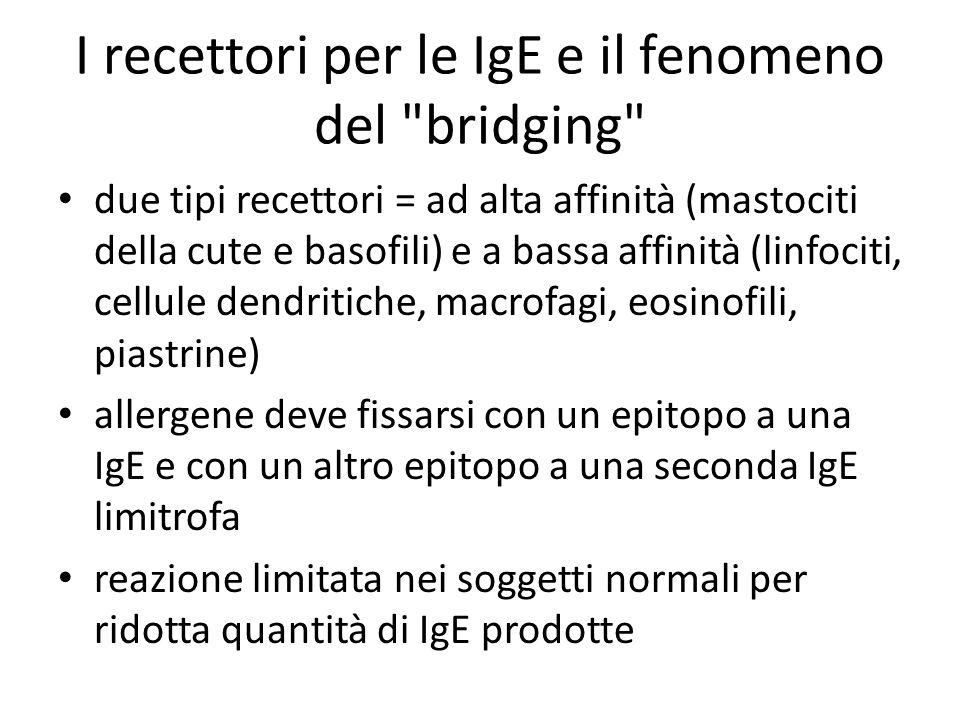 I recettori per le IgE e il fenomeno del bridging