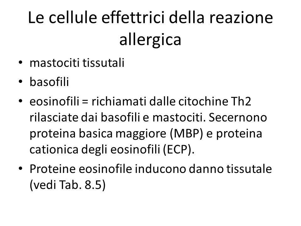 Le cellule effettrici della reazione allergica