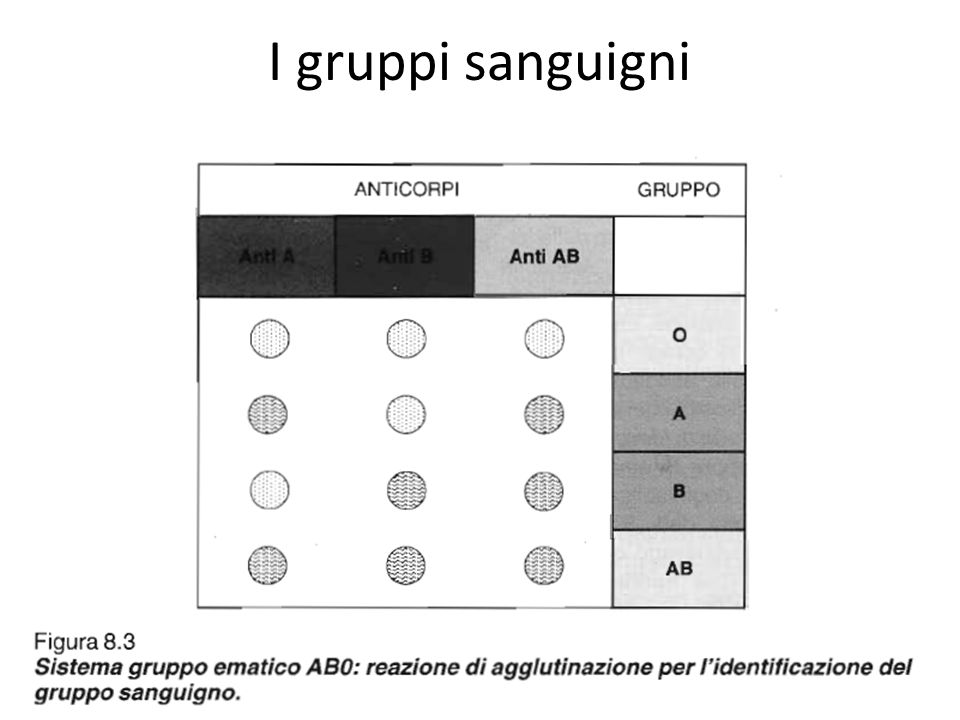 I gruppi sanguigni Fig 8.3 Tab 8.9