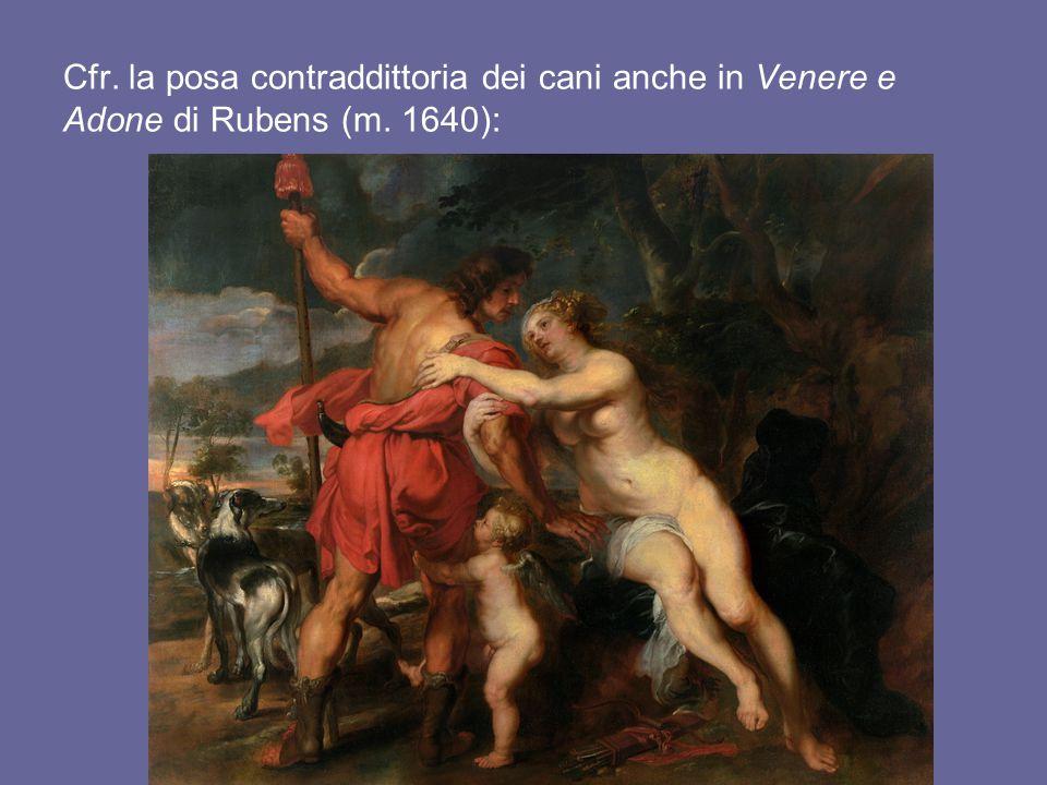 Cfr. la posa contraddittoria dei cani anche in Venere e Adone di Rubens (m. 1640):