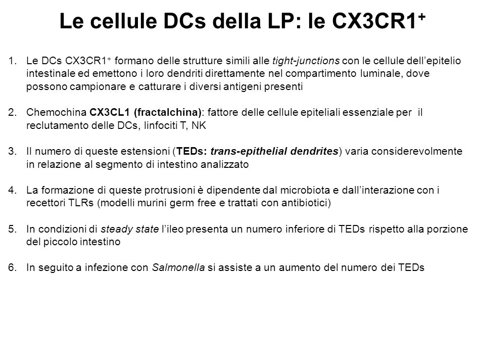 Le cellule DCs della LP: le CX3CR1+