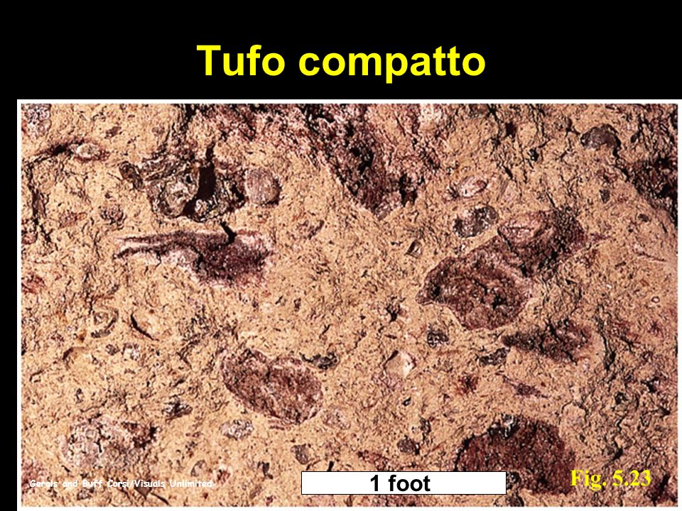 Tufo compatto Fig. 5.23 1 foot Gerals and Buff Corsi/Visuals Unlimited