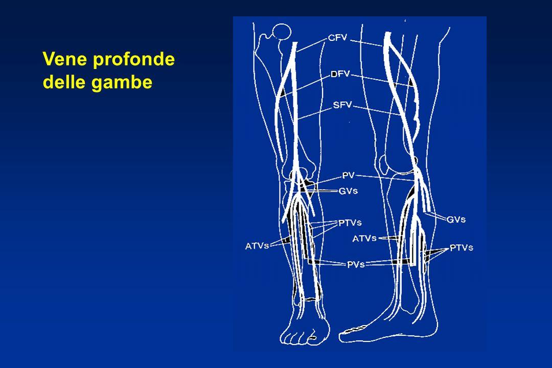 Vene profonde delle gambe