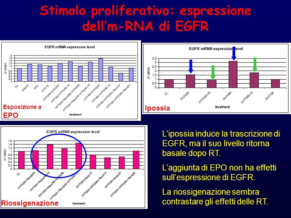 Stimolo proliferativo: espressione dell'm-RNA di EGFR