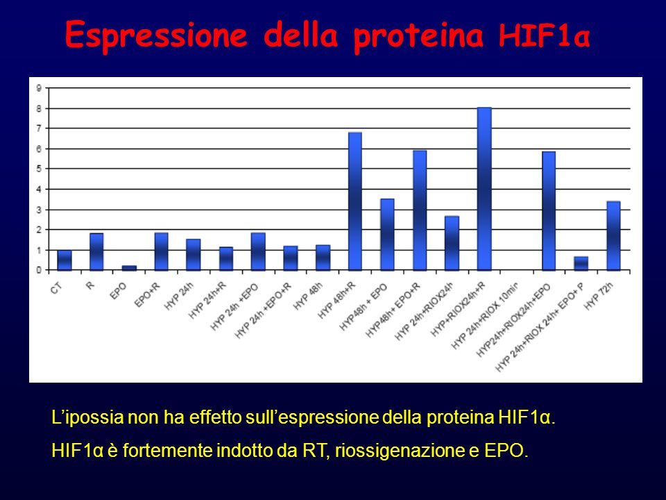 Espressione della proteina HIF1α