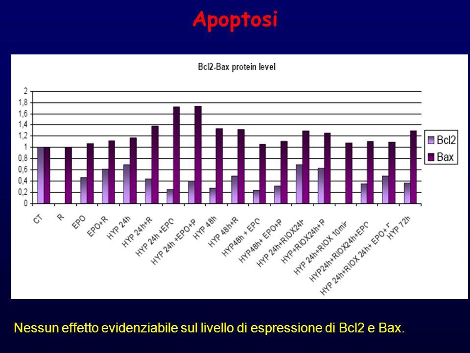 Apoptosi Nessun effetto evidenziabile sul livello di espressione di Bcl2 e Bax.