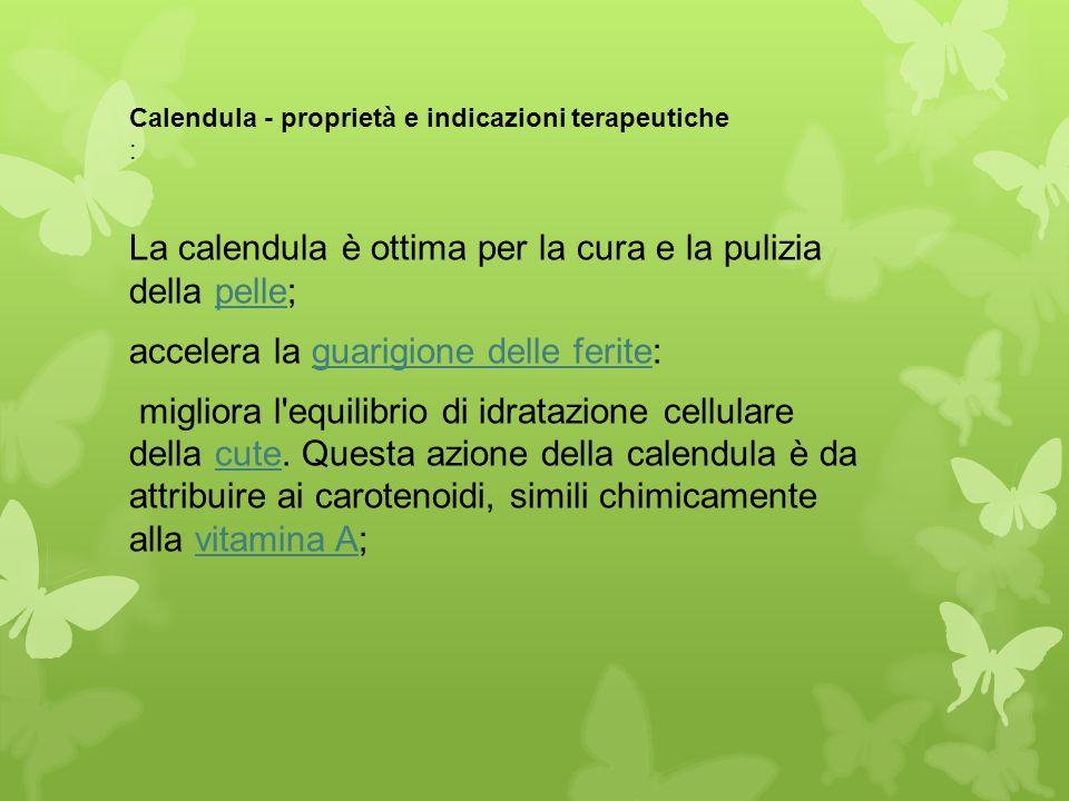 Calendula - proprietà e indicazioni terapeutiche :