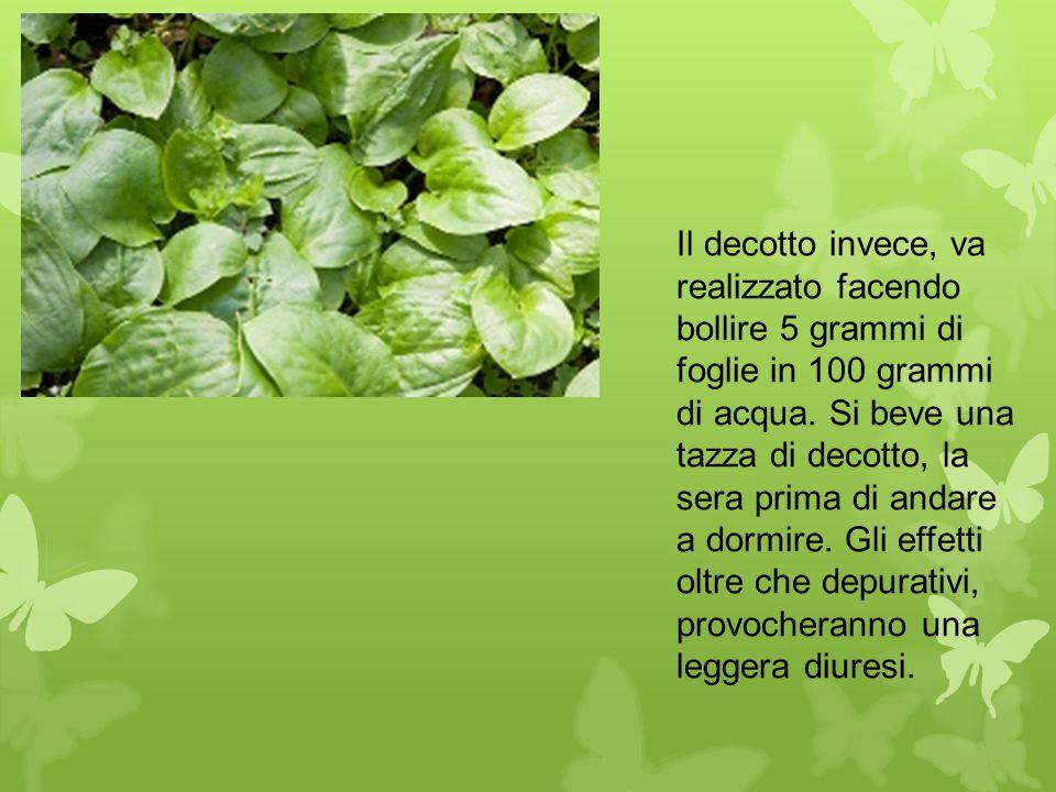 Il decotto invece, va realizzato facendo bollire 5 grammi di foglie in 100 grammi di acqua.