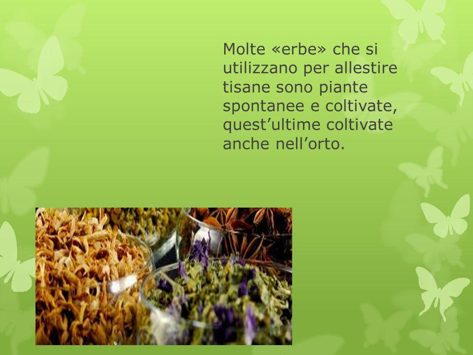 Molte «erbe» che si utilizzano per allestire tisane sono piante spontanee e coltivate, quest'ultime coltivate anche nell'orto.
