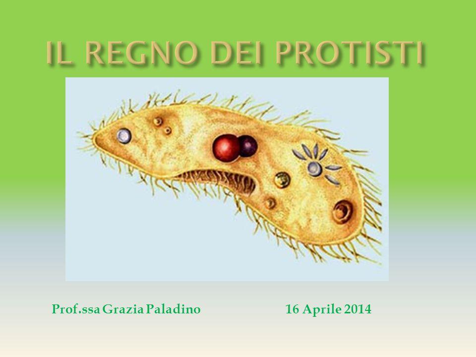 IL REGNO DEI PROTISTI Prof.ssa Grazia Paladino 16 Aprile 2014