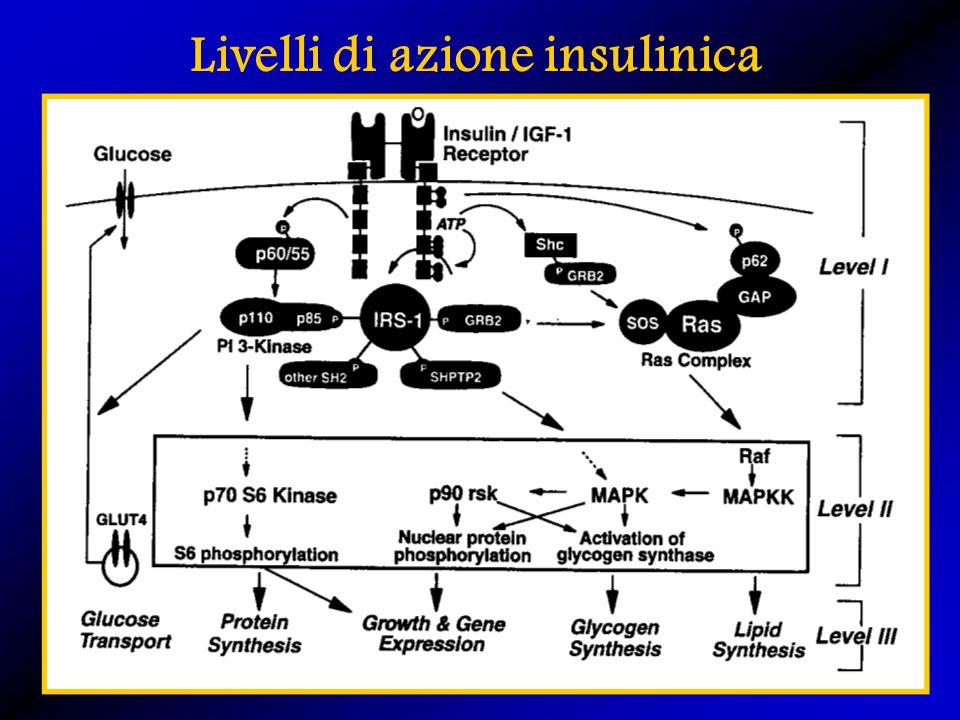 Livelli di azione insulinica