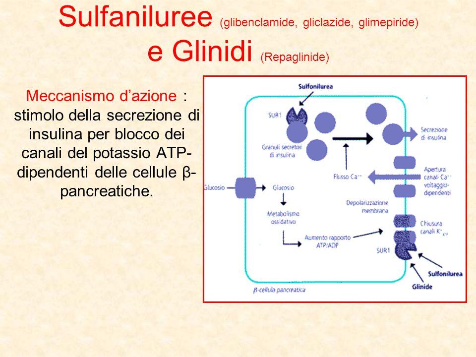 Sulfaniluree (glibenclamide, gliclazide, glimepiride) e Glinidi (Repaglinide)