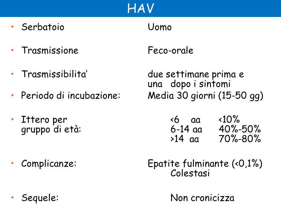 HAV Serbatoio Uomo Trasmissione Feco-orale