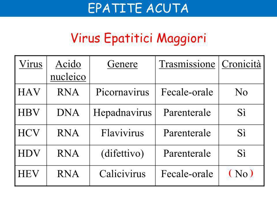 Virus Epatitici Maggiori