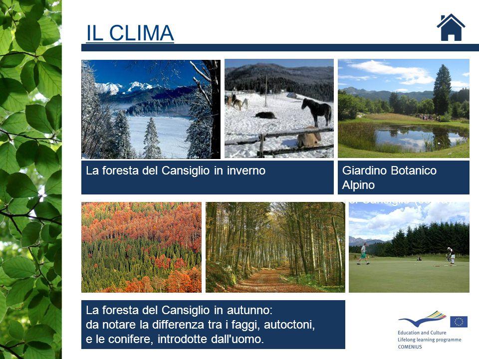 IL CLIMA La foresta del Cansiglio in inverno Giardino Botanico Alpino
