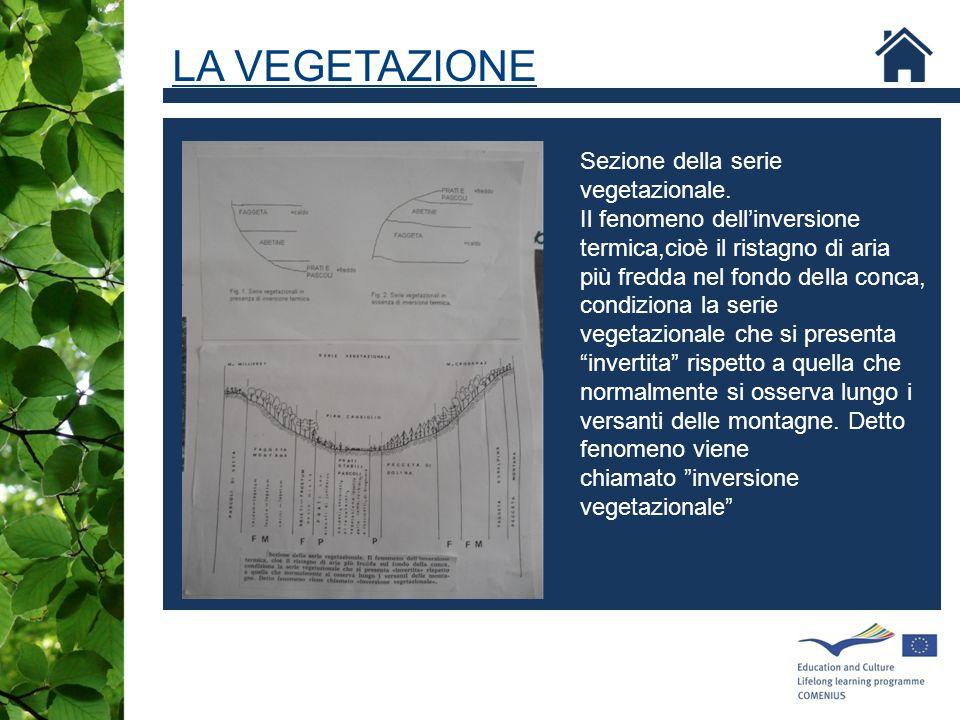 LA VEGETAZIONE Sezione della serie vegetazionale.