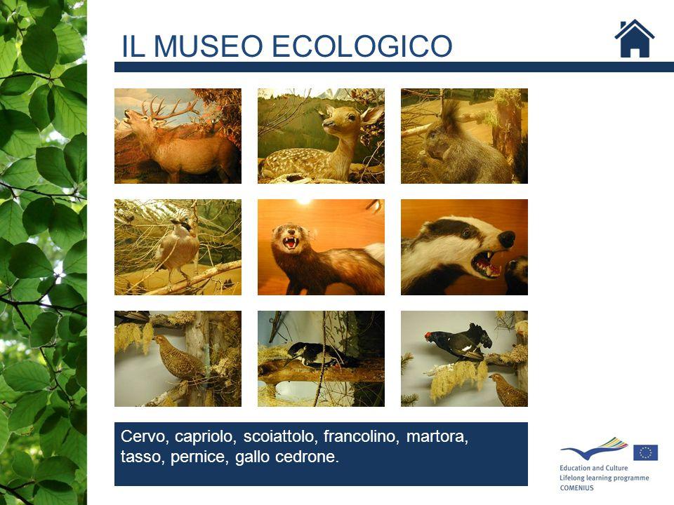 IL MUSEO ECOLOGICO SCOIATTOLO