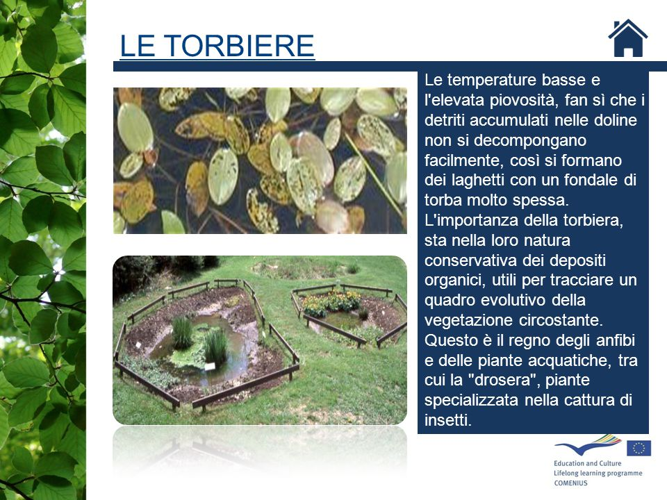 LE TORBIERE