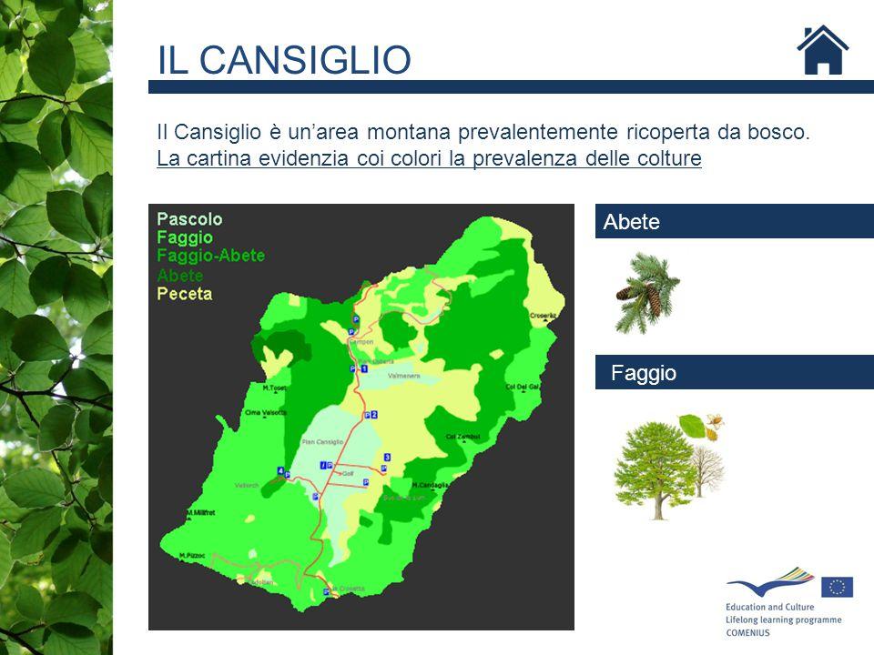 IL CANSIGLIO Il Cansiglio è un'area montana prevalentemente ricoperta da bosco. La cartina evidenzia coi colori la prevalenza delle colture.