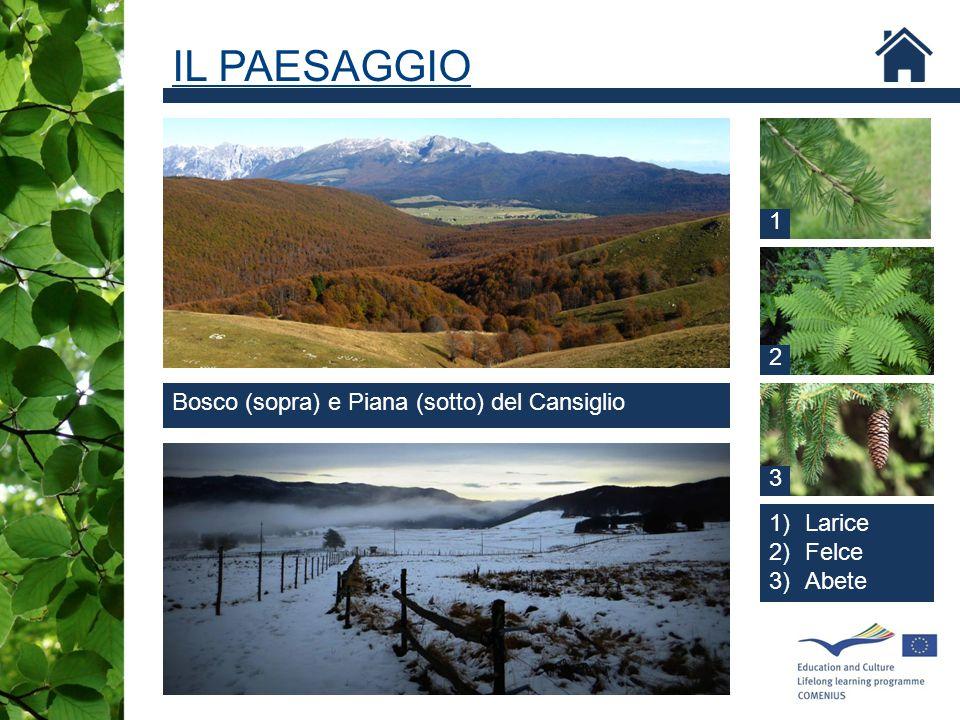 IL PAESAGGIO 1 2 Bosco (sopra) e Piana (sotto) del Cansiglio 3 Larice