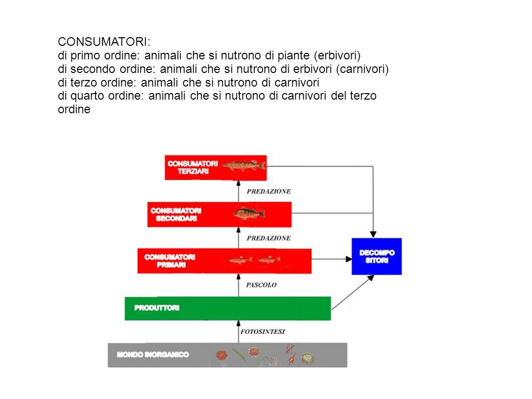 CONSUMATORI: di primo ordine: animali che si nutrono di piante (erbivori) di secondo ordine: animali che si nutrono di erbivori (carnivori)