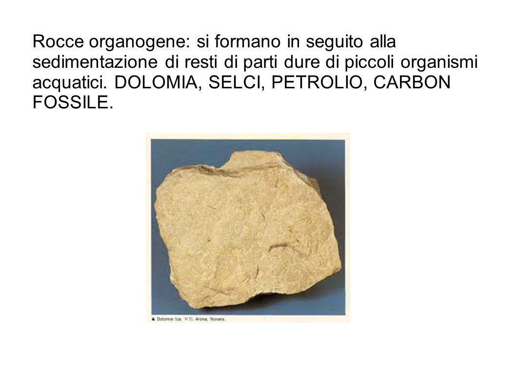 Rocce organogene: si formano in seguito alla sedimentazione di resti di parti dure di piccoli organismi acquatici.