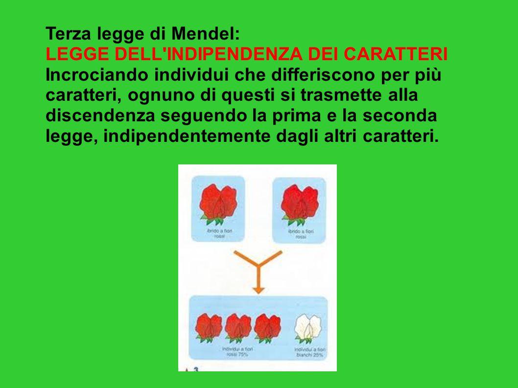 Terza legge di Mendel: LEGGE DELL INDIPENDENZA DEI CARATTERI.