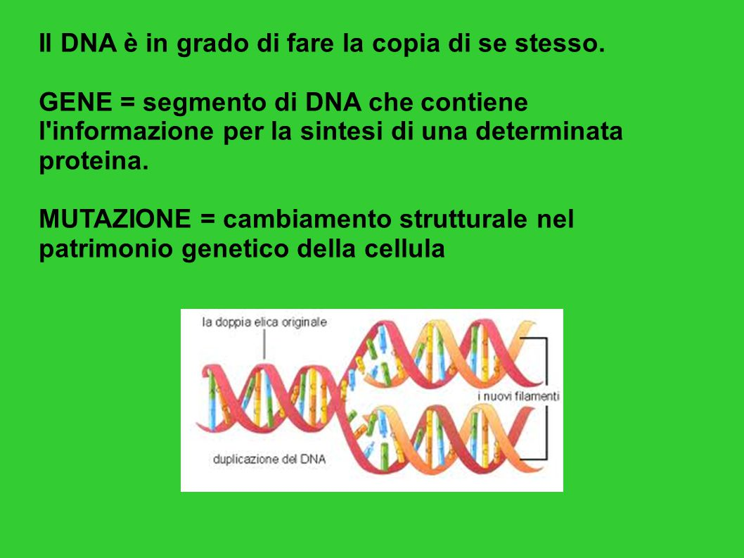 Il DNA è in grado di fare la copia di se stesso.