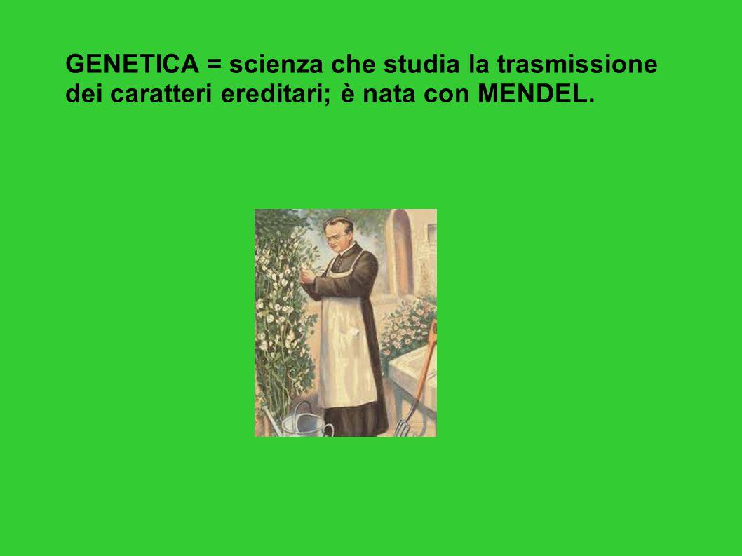 GENETICA = scienza che studia la trasmissione dei caratteri ereditari; è nata con MENDEL.