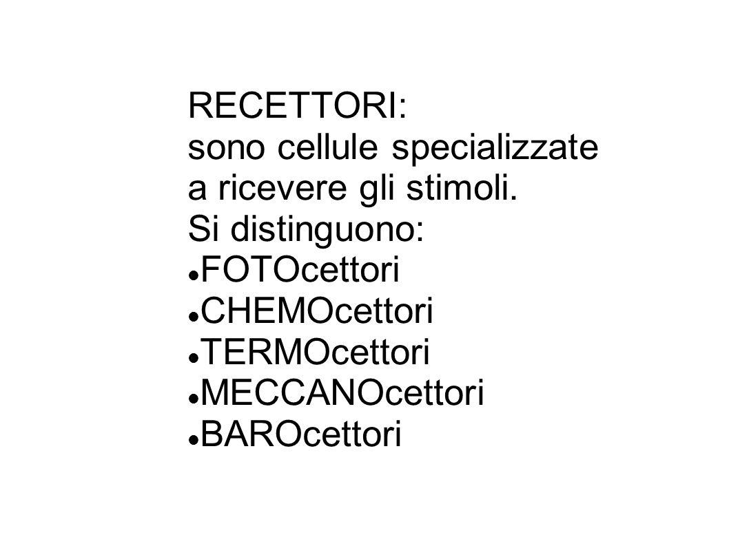 RECETTORI: sono cellule specializzate. a ricevere gli stimoli. Si distinguono: FOTOcettori. CHEMOcettori.