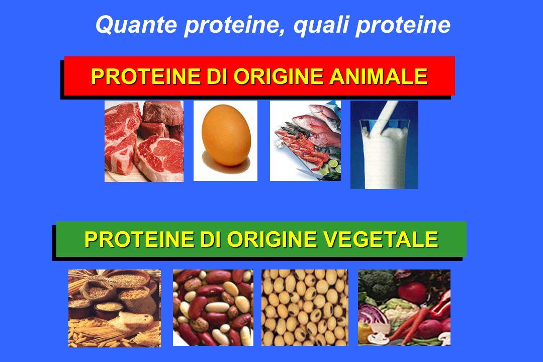 PROTEINE DI ORIGINE ANIMALE PROTEINE DI ORIGINE VEGETALE