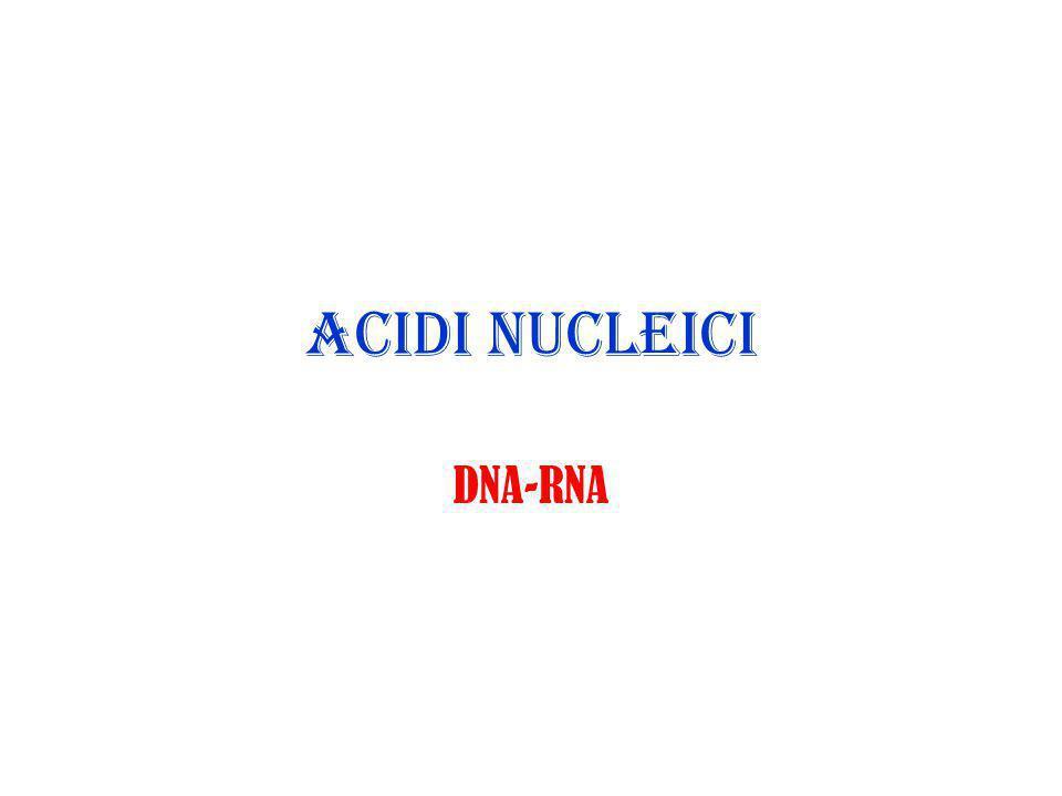 ACIDI NUCLEICI DNA-RNA