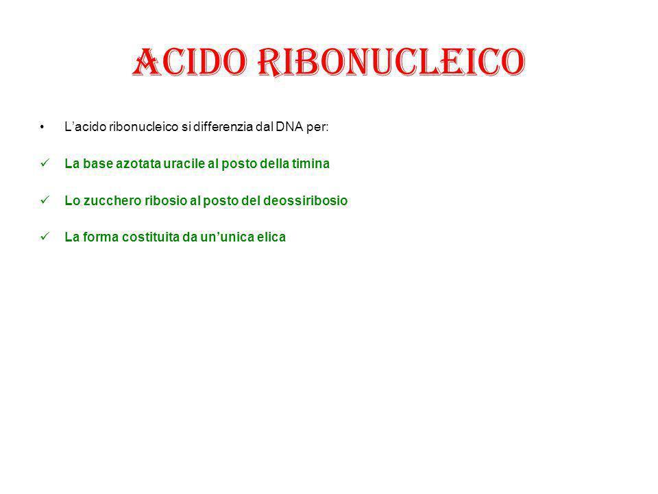 Acido ribonucleico L'acido ribonucleico si differenzia dal DNA per: