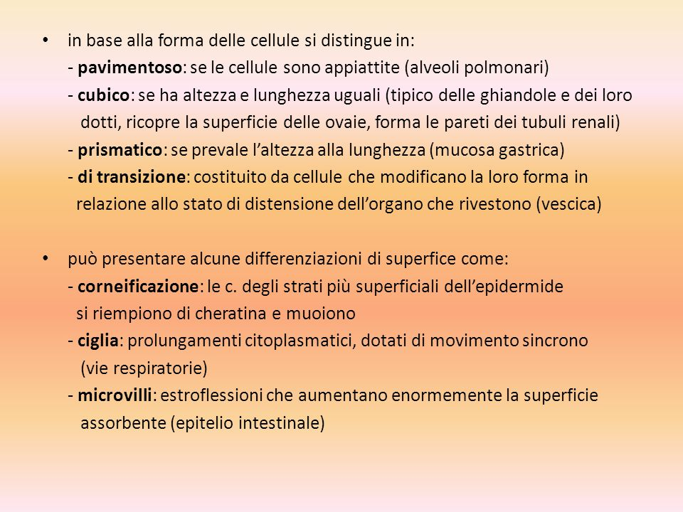 in base alla forma delle cellule si distingue in: