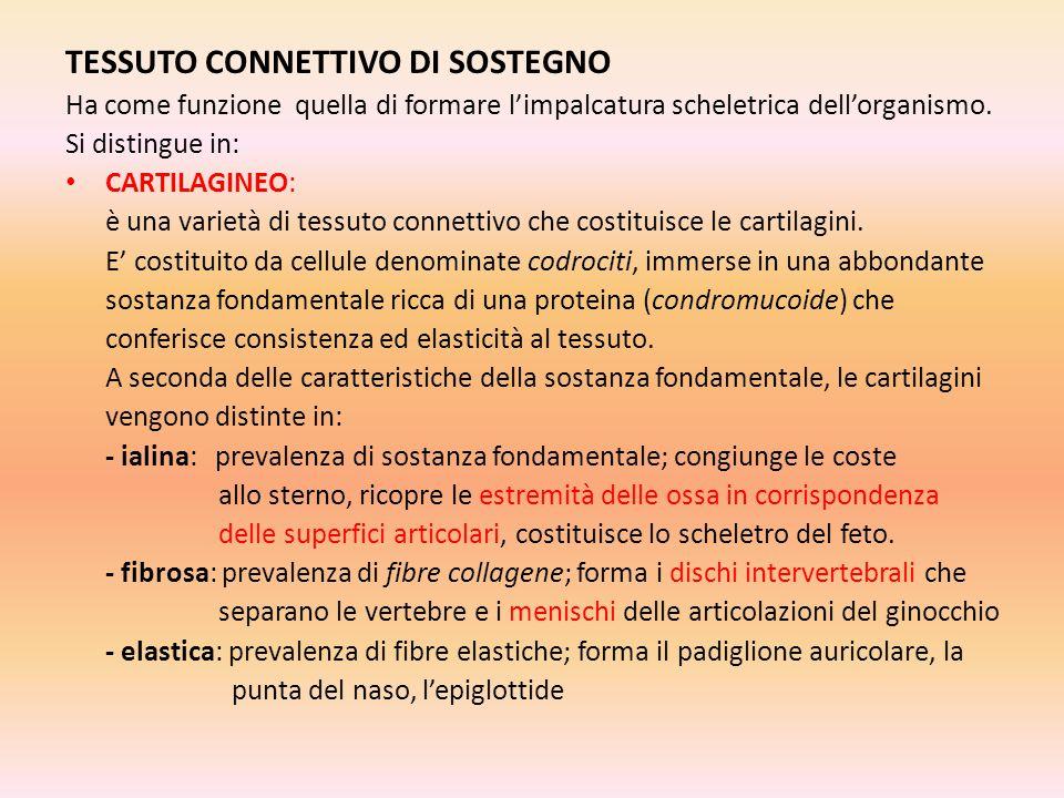 TESSUTO CONNETTIVO DI SOSTEGNO