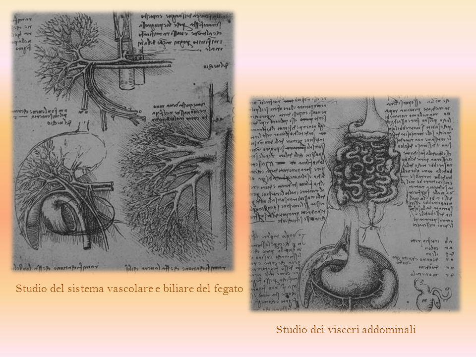 Studio del sistema vascolare e biliare del fegato
