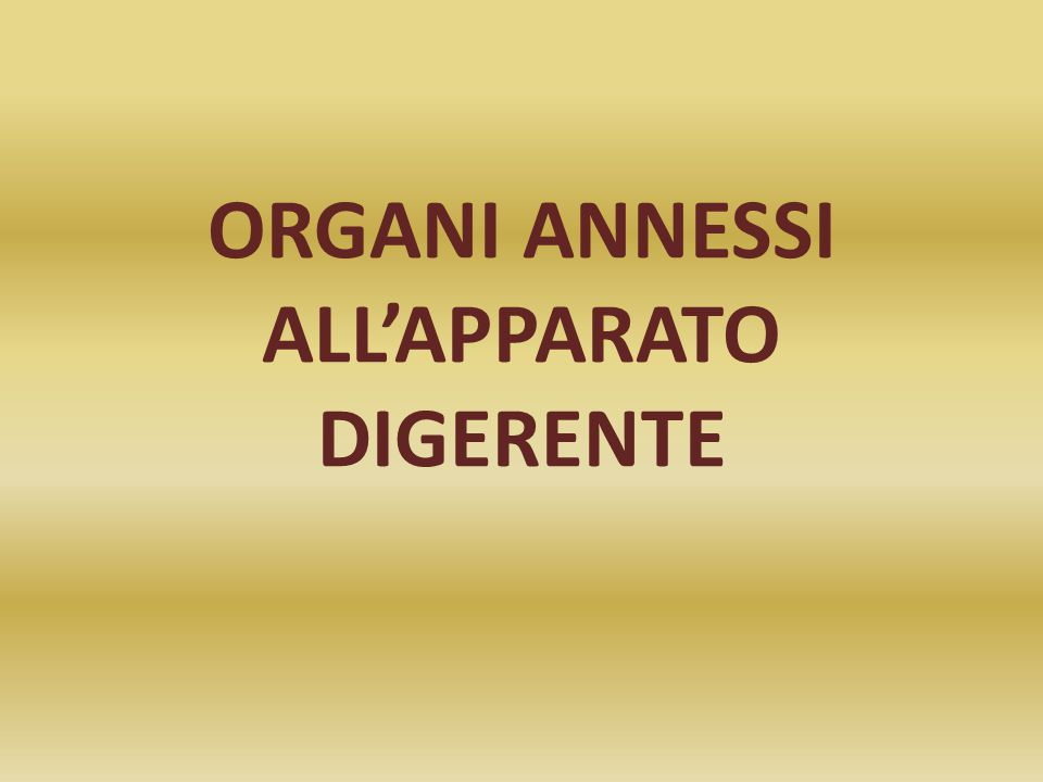 ORGANI ANNESSI ALL'APPARATO DIGERENTE