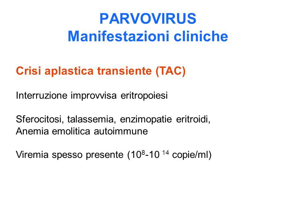 PARVOVIRUS Manifestazioni cliniche