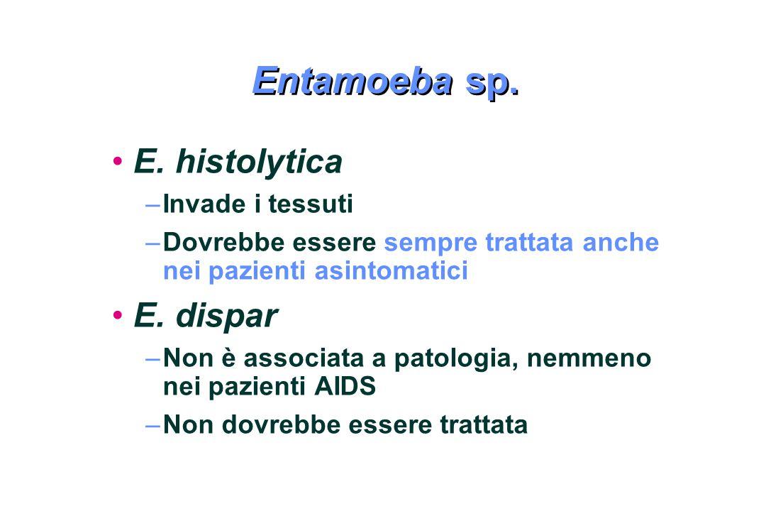 Entamoeba sp. E. histolytica E. dispar Invade i tessuti