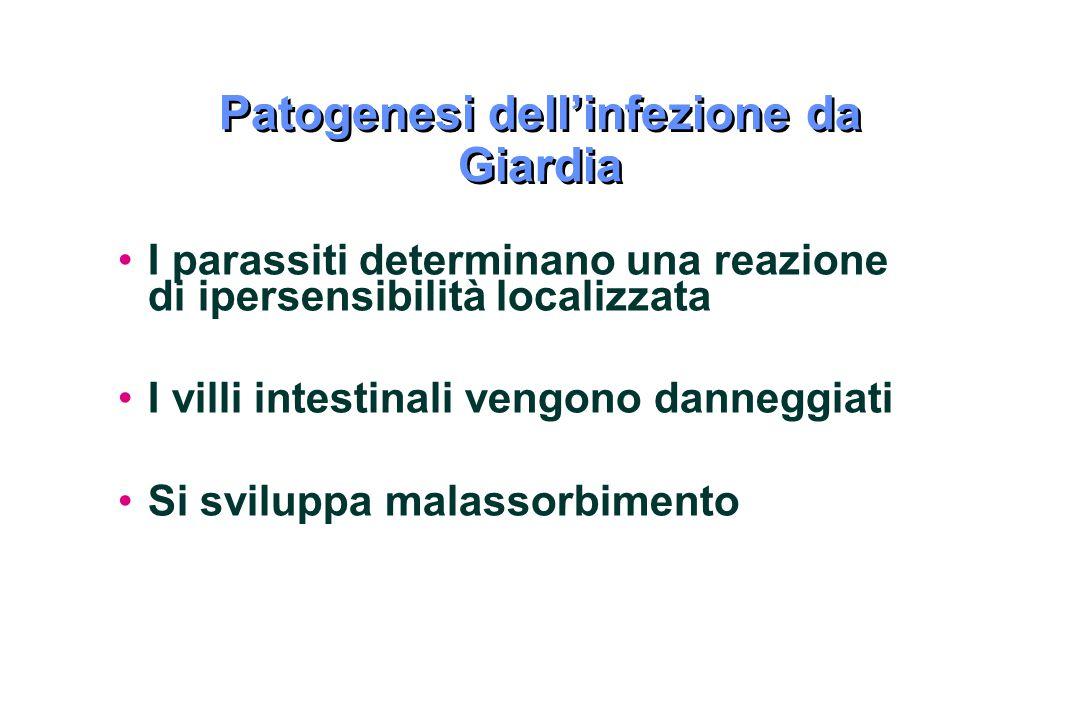 Patogenesi dell'infezione da Giardia