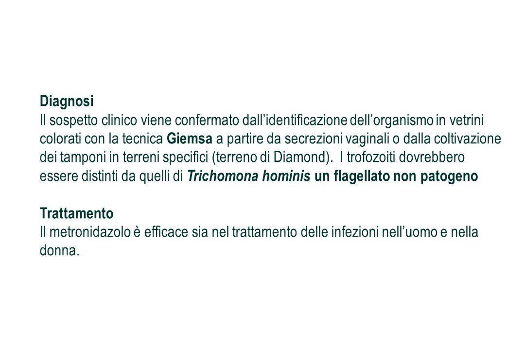 Diagnosi Il sospetto clinico viene confermato dall'identificazione dell'organismo in vetrini colorati con la tecnica Giemsa a partire da secrezioni vaginali o dalla coltivazione dei tamponi in terreni specifici (terreno di Diamond). I trofozoiti dovrebbero essere distinti da quelli di Trichomona hominis un flagellato non patogeno