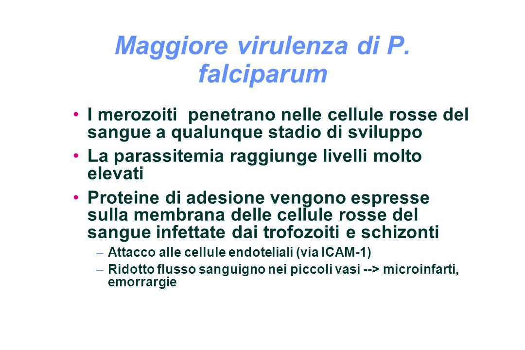 Maggiore virulenza di P. falciparum